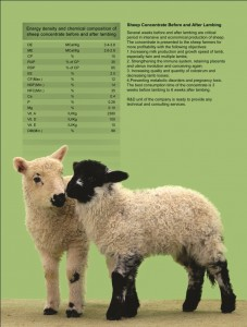 before and after lambing